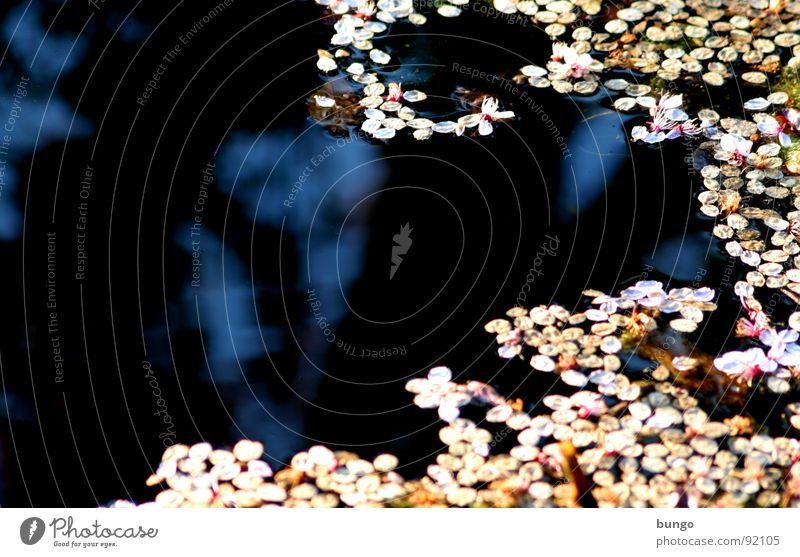 Stille Tränen haben einen tiefen Ursprung Teich Reflexion & Spiegelung Blüte Muster dunkel Oberfläche Wasser reflektion blüttenblätter bedecken