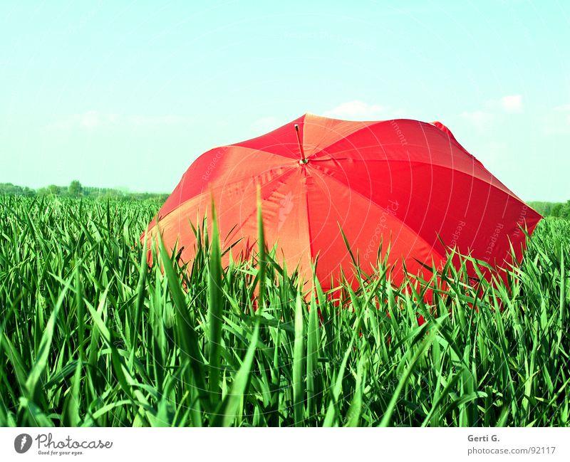 once again... charmant Sonnenschirm Schutzausrüstung Regenschirm rot Sommer Feld Kornfeld frisch mehrfarbig grün-rot Landwirtschaft Wind Halm Bewegung