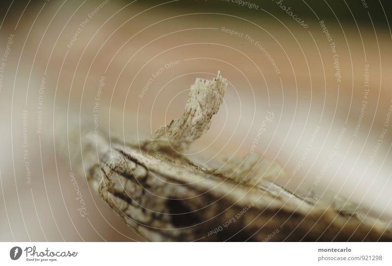ausgepaddelt Paddel Schifffahrt Holz alt dünn authentisch fest kaputt nachhaltig natürlich Originalität retro trocken grau Farbfoto mehrfarbig Außenaufnahme