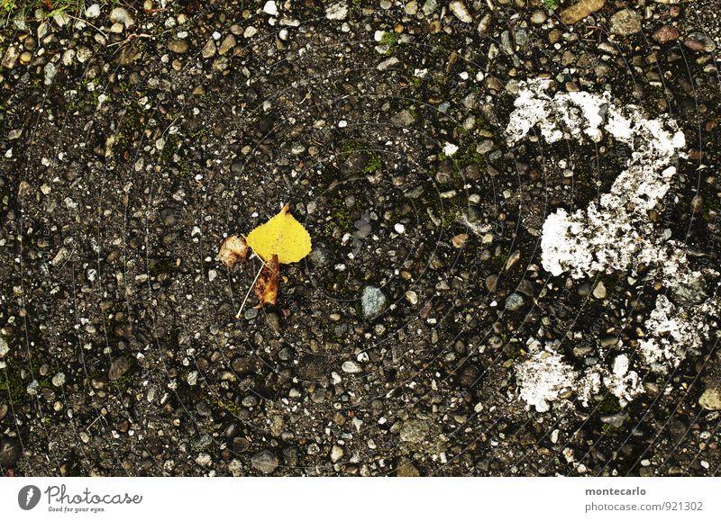 3 Umwelt Natur Herbst Pflanze Blatt Grünpflanze Wildpflanze Stein Ziffern & Zahlen alt dunkel dünn authentisch einfach kalt klein natürlich trist trocken