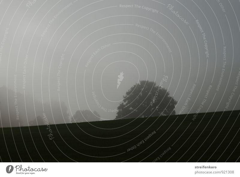 Baumsilhouetten im Nebel Landschaft Pflanze Sonnenlicht Herbst Feld Hügel Berge u. Gebirge Eifel dunkel grau Stimmung ruhig Traurigkeit Einsamkeit geheimnisvoll