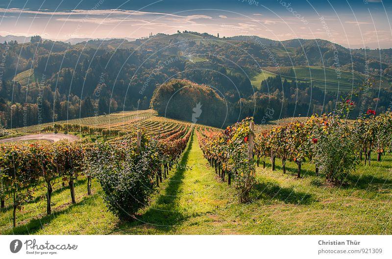 Reif für die Herbsternte Natur Pflanze schön Erholung Landschaft ruhig Wolken Ferne Wald Umwelt Herbst Gefühle Gras Gesundheit Feld Zufriedenheit