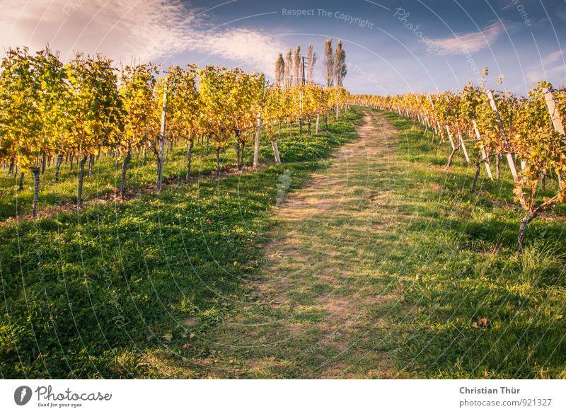 Letzte Herbsttage Natur Ferien & Urlaub & Reisen Landschaft ruhig Wolken Umwelt Berge u. Gebirge Leben Wiese Zufriedenheit leuchten Tourismus wandern hoch