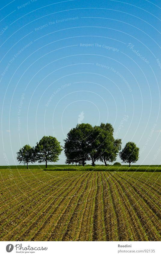 30 min. mitm Rad Himmel Natur Baum Ferien & Urlaub & Reisen Pflanze Sommer ruhig Ferne Leben Freiheit Frühling Horizont Feld leer einfach Idylle