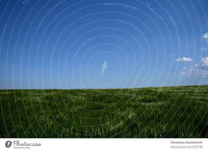Ein Stück vom Himmel Wolken Horizont Kornfeld glänzend Feld Landwirtschaft weiß grün Erholung Gerste Gerstenfeld Frühling blau friedlich Grönemeyer