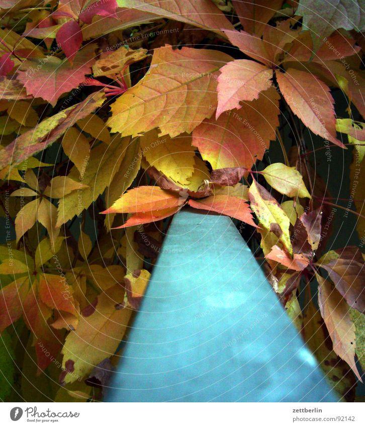 Herbst blau rot Blatt gelb Romantik Geländer Herbstlaub Oktober September Komplementärfarbe