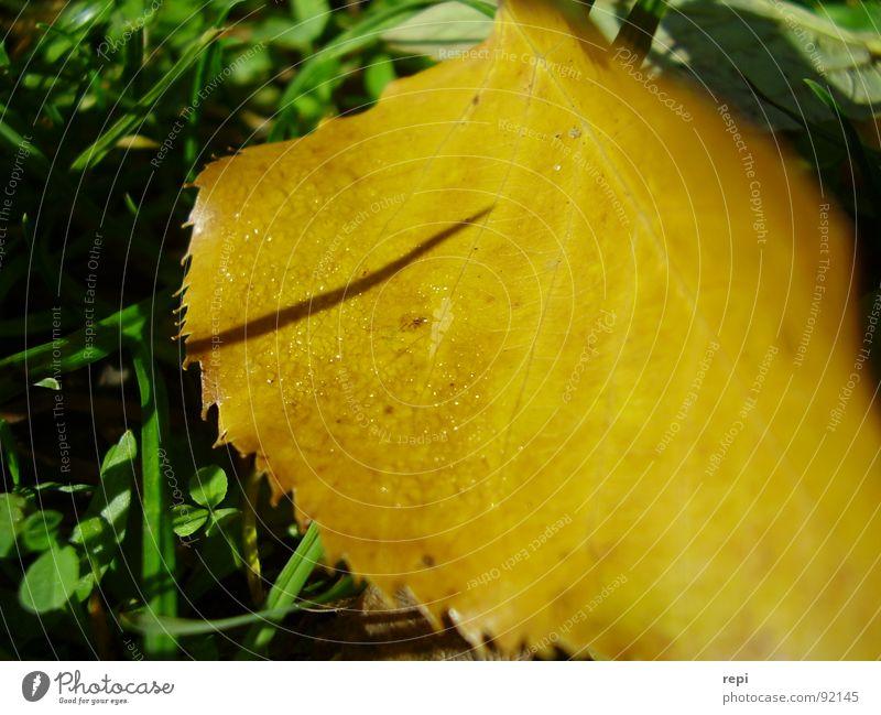 Herbst Natur grün Blatt gelb Umwelt fallen