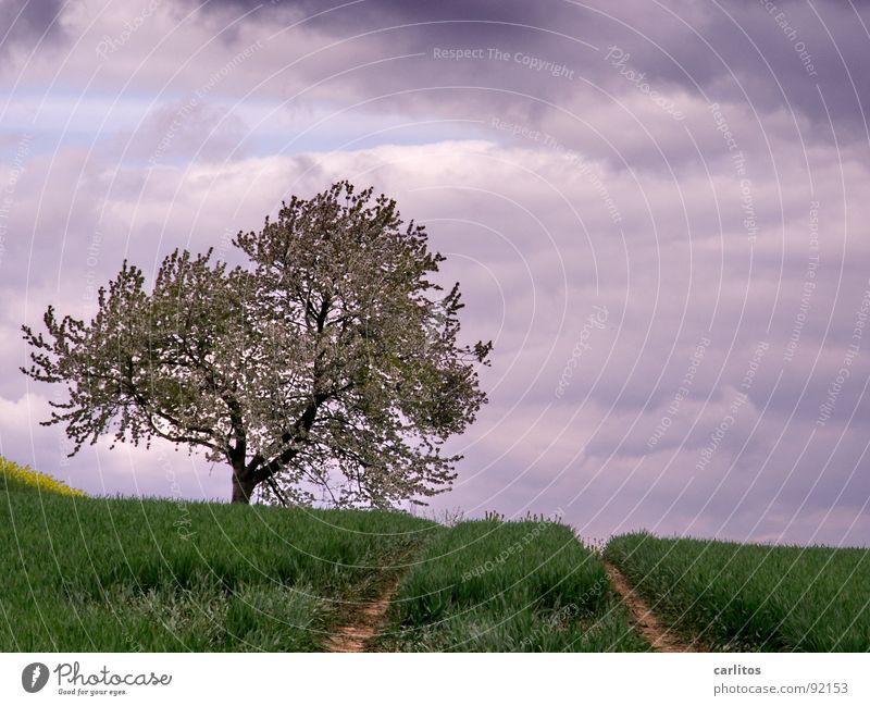 Wieder kein Beton II Feld Aussaat aufgehen Landwirtschaft Spuren Traktorspur Baum Obstbaum Blüte Wolken dunkel Frühling Getreide Raps am Bildrand Himmel