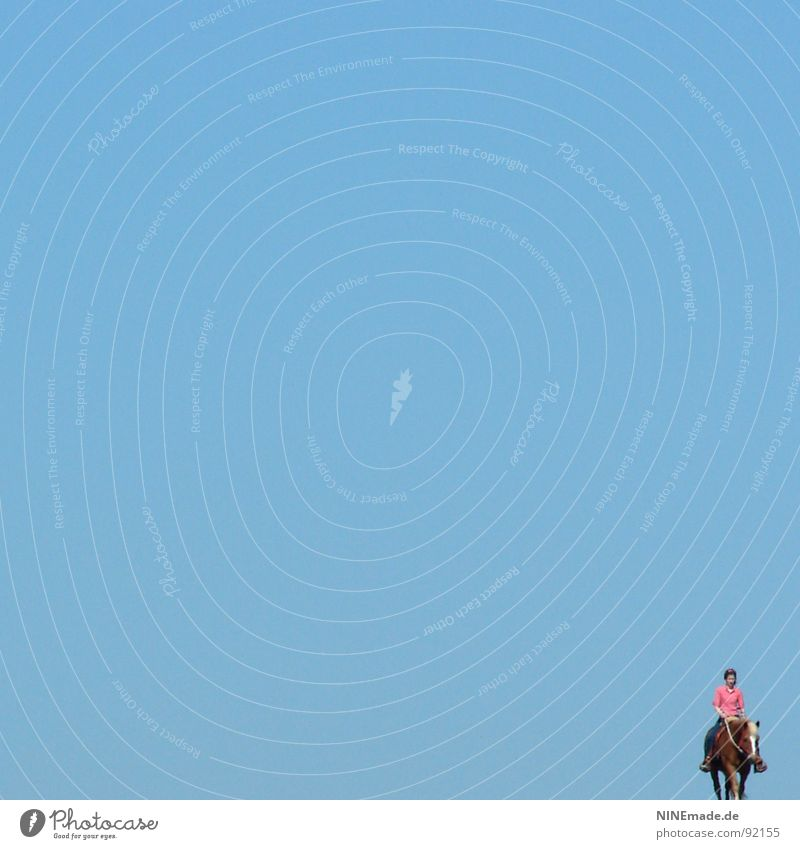 voll Blau ... Himmel blau Sommer ruhig Einsamkeit Ferne Sport Erholung Gefühle Freiheit Zufriedenheit braun klein rosa laufen Pferd
