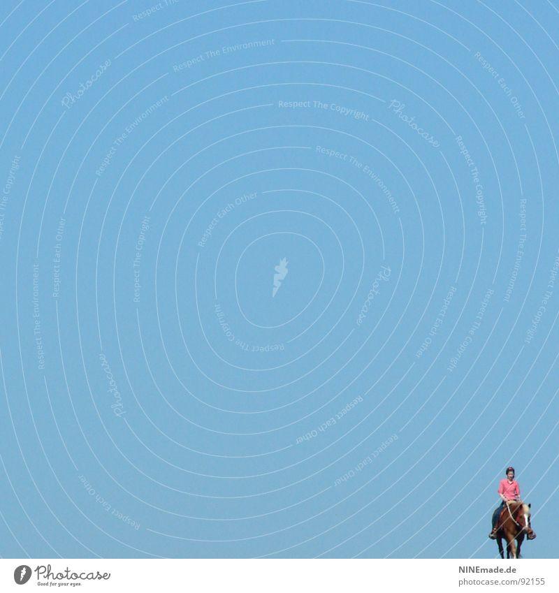 voll Blau ... himmelblau Pferd rosa braun Gefühle Gute Laune Einsamkeit ruhig genießen laufen klein in der Ecke Gelassenheit Erholung Reitsport Freizeit & Hobby