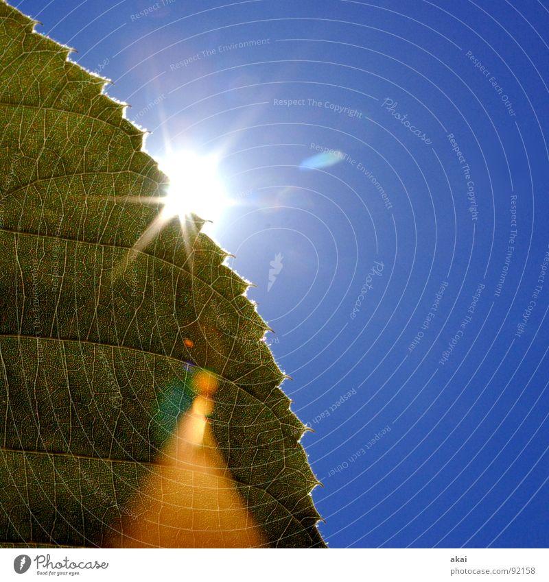 Das Blatt 5 Natur Baum grün Pflanze Leben Kraft Hintergrundbild Umwelt geschlossen Sträucher nah Ast Landwirtschaft reif Botanik