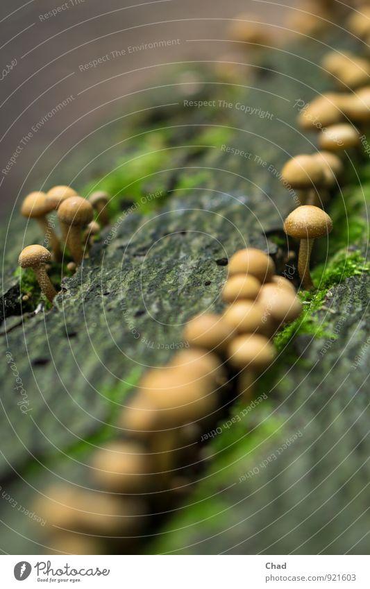Reihen Pilz Natur Pflanze grün ruhig schwarz Gesunde Ernährung Wald Umwelt Herbst Essen Gesundheit braun Lebensmittel Zusammensein wandern genießen