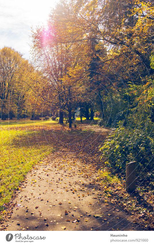goldener Herbst Umwelt Natur Landschaft Himmel Sonne Sonnenlicht Klima Wetter Schönes Wetter Pflanze Baum Gras Sträucher Blatt Grünpflanze Wildpflanze Laubbaum