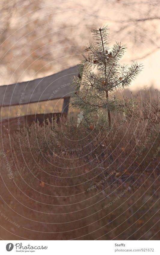 Eine Pause mitten in Herbstheide in dunklem Novemberlicht Heidestimmung Heideromantik nordische Romantik heimisch melancholisch nordische Natur