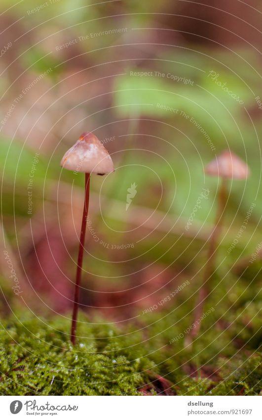 Zweisam Natur nackt Pflanze grün Wald Umwelt Herbst natürlich Gesundheit braun Zusammensein wild elegant frisch einfach dünn