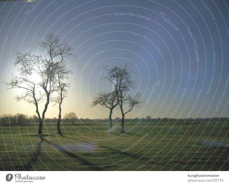mondnacht im dezember II Baum dunkel Wiese Gras Landschaft Mond Nachtaufnahme Himmelskörper & Weltall Niedersachsen Werwolf