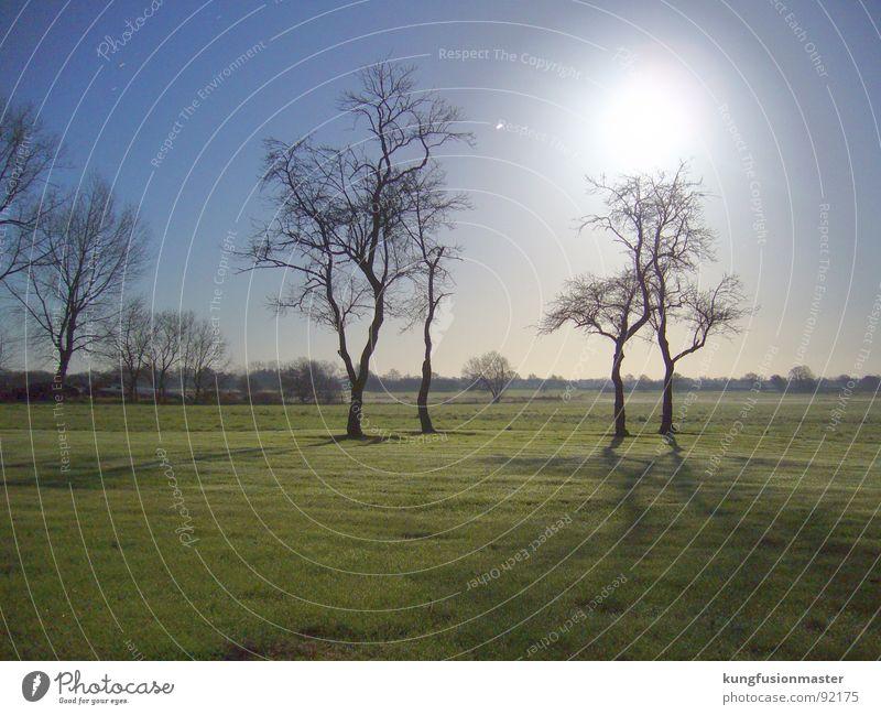 mondnacht im dezember III Baum dunkel Wiese Gras Landschaft Mond Nachtaufnahme Himmelskörper & Weltall Niedersachsen Werwolf