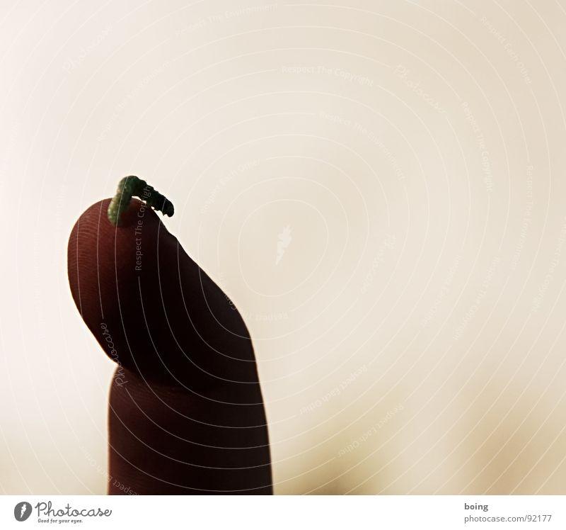 Mukophagiker's Paradise Raupe Finger Tierfreund Botaniker Schmetterling Kokon Metamorphose Entwicklung Fingerabdruck Biometrie gestikulieren Seife Klettern