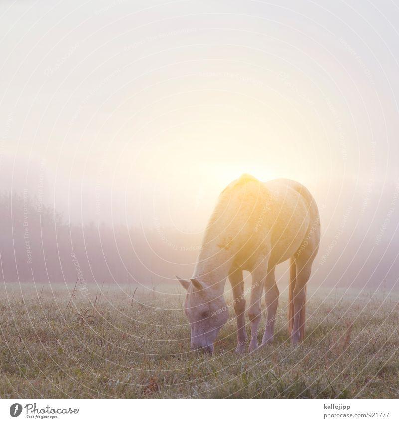 jwd Umwelt Natur Landschaft Pflanze Tier Wolkenloser Himmel Herbst Wetter Schönes Wetter Nebel Grünpflanze Wiese Feld Fressen Pferd Nutztier Weide ruhig