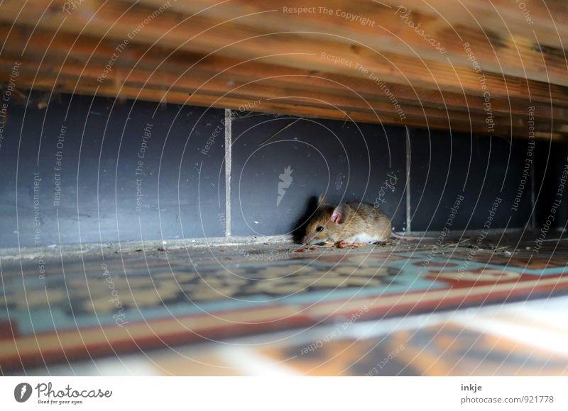Mäuschen Stadt Tier klein Wildtier sitzen niedlich Neugier entdecken verstecken Terrasse krabbeln Maus Versteck hocken Hausmaus