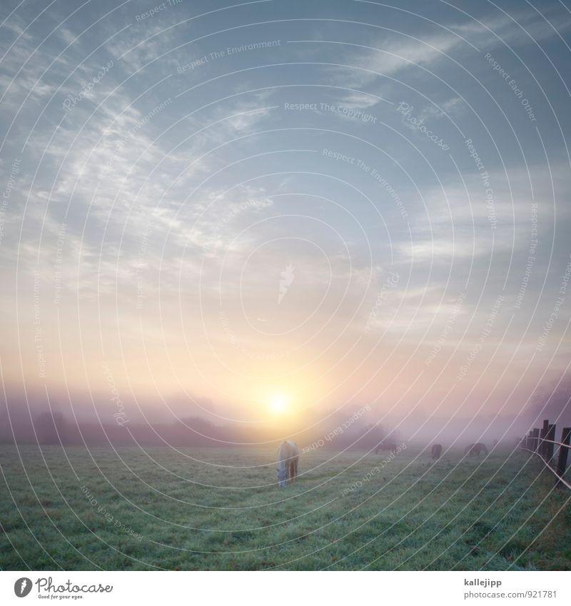 frühstücksbuffet Himmel Natur Pflanze Landschaft Wolken Tier Umwelt Wiese Gras Horizont Lifestyle Feld Nebel Landwirtschaft Kitsch Pferd
