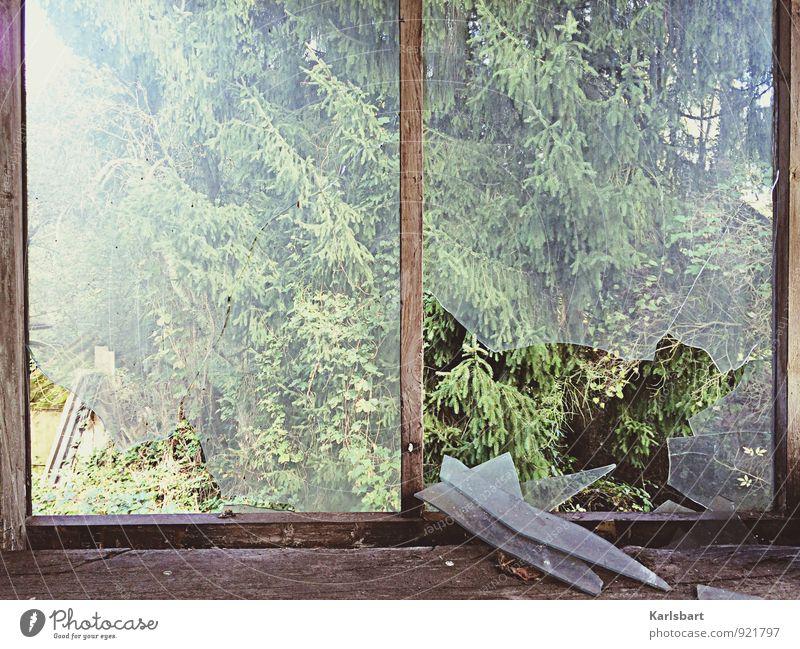 Das Fenster zum Wald. Häusliches Leben Wohnung Garten Hausbau Renovieren Umzug (Wohnungswechsel) Natur Sonnenlicht Sommer Herbst Schönes Wetter Baum kaputt