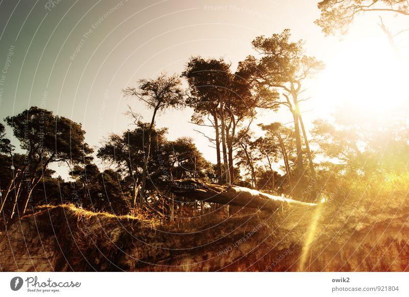 Nordlicht Umwelt Natur Landschaft Pflanze Baum Holz leuchten Idylle Wolkenloser Himmel Weststrand Küste Demontage Am Rand Farbfoto Außenaufnahme Menschenleer