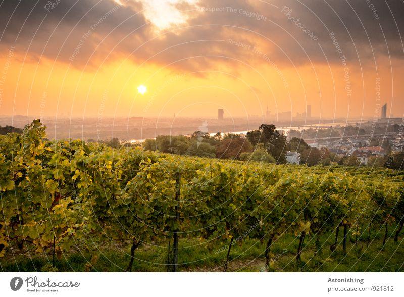 Morgen über Wien 5 Umwelt Natur Landschaft Pflanze Himmel Wolken Horizont Sonne Sonnenaufgang Sonnenuntergang Herbst Schönes Wetter Baum Gras Sträucher Hügel
