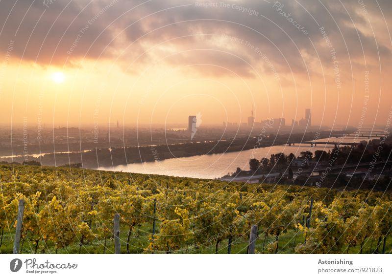 Morgen über Wien 4 Umwelt Natur Landschaft Pflanze Luft Himmel Wolken Horizont Sonne Sonnenaufgang Sonnenuntergang Sonnenlicht Herbst Wetter Schönes Wetter Baum