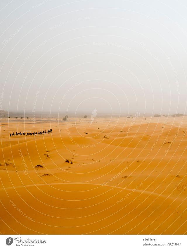 Wüste (3/10) Ferien & Urlaub & Reisen Wärme Sand Tourismus Abenteuer Düne Durst Naher und Mittlerer Osten Arabien Marokko Kamel Karavane Sahara Tunesien