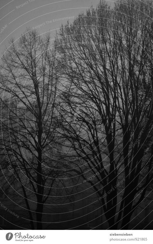 FINSTERWORLD Natur Baum Einsamkeit Tier schwarz Winter dunkel Wald kalt Umwelt Traurigkeit Stimmung Kraft Nebel bedrohlich fantastisch
