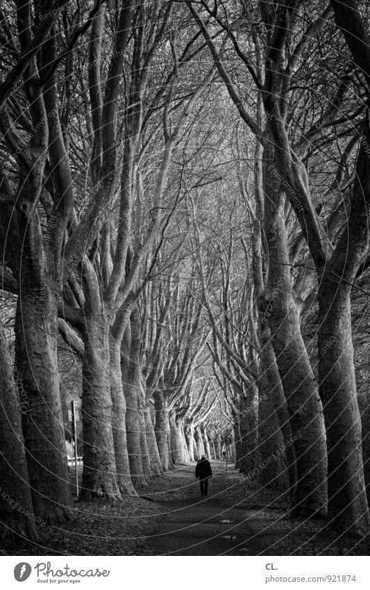 weg Mensch Natur Baum Einsamkeit Landschaft ruhig dunkel Umwelt Erwachsene Leben Traurigkeit Wege & Pfade gehen Park Perspektive Zukunft