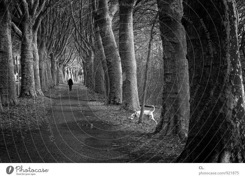 weg Hund Mensch Natur Baum Einsamkeit Landschaft ruhig Tier Umwelt Erwachsene Leben Wege & Pfade gehen Park Perspektive Schönes Wetter