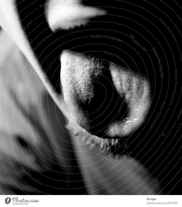 """Mach mal """"aaahhh"""" Selbstportrait Bart schwarz weiß rausstrecken Bäh ungesund Ekel Speichel Gesundheit trocken dunkel Mann Freude Schwarzweißfoto Gesicht Lippen"""