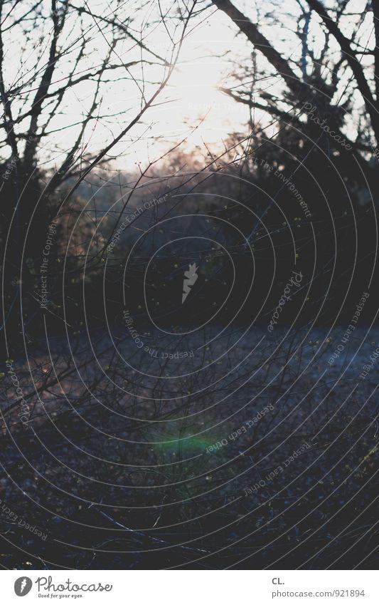 wald Umwelt Natur Landschaft Schönes Wetter Baum Sträucher Ast Wald ruhig Farbfoto Außenaufnahme Menschenleer Tag Licht Schatten Kontrast Lichterscheinung