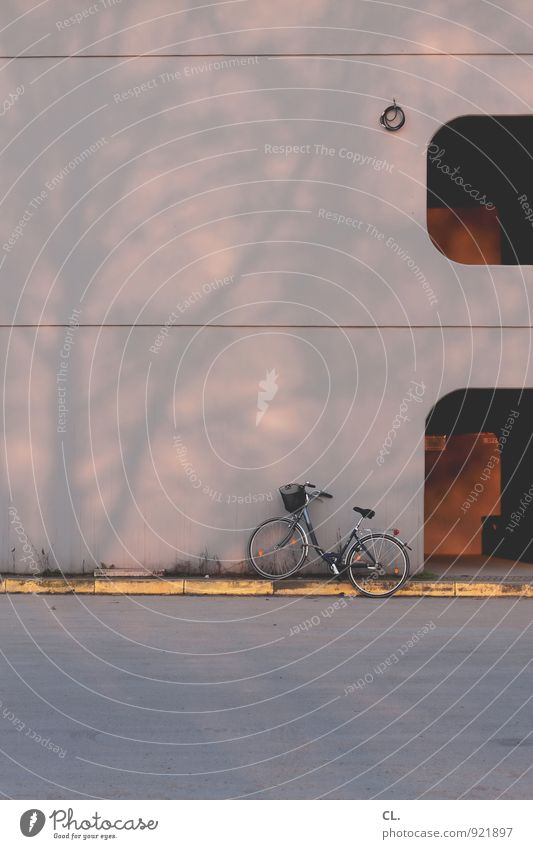 rad Schönes Wetter Baum Gebäude Architektur Verkehr Verkehrsmittel Fahrradfahren Straße Wege & Pfade Farbfoto Außenaufnahme Menschenleer Textfreiraum oben Tag
