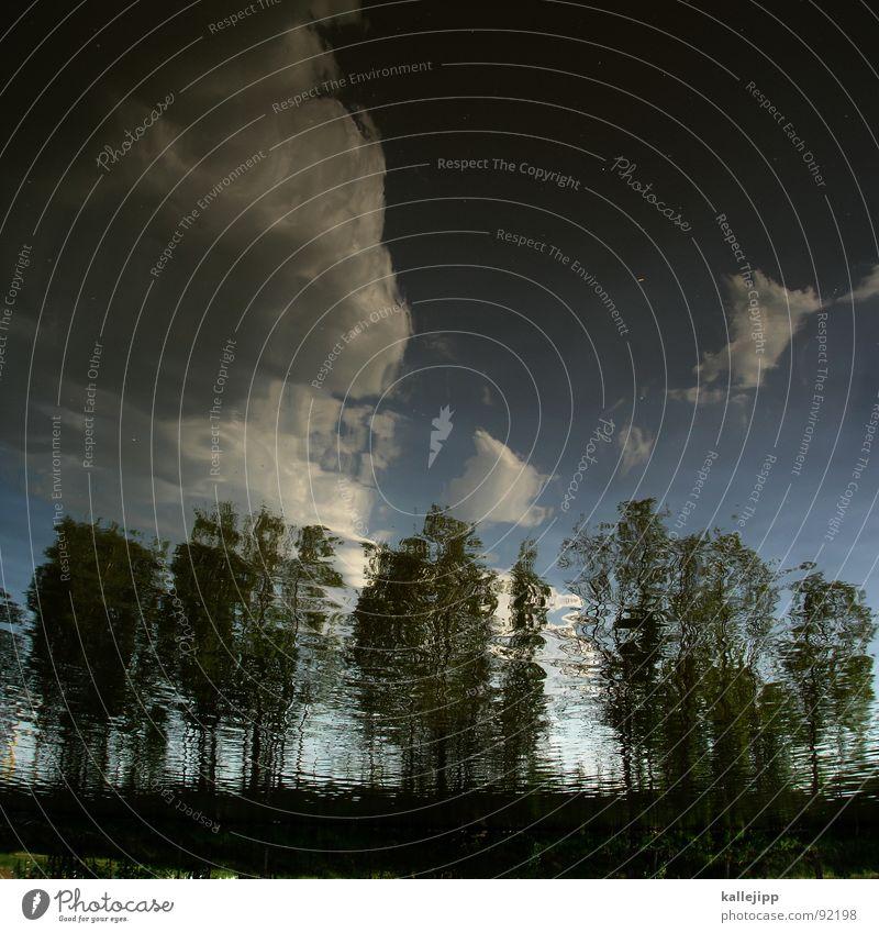 havelland Baum Wäldchen Wolken Reflexion & Spiegelung Wasser Flussufer Uferbefestigung Schönes Wetter Mauer Grenze Brandenburg Osten Bach mauerradweg
