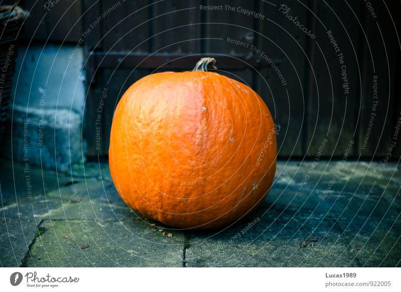 Kürbis Pflanze Gesundheit Speise Halloween Kürbis Erntedankfest