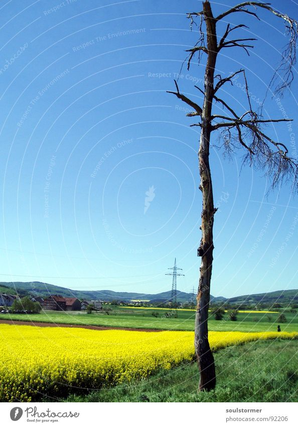 Ja er lebt noch... Raps Pflanze gelb grün Frühling Feld Rapsfeld Landwirtschaft Honig Biene Blüte Blume ökologisch Strommast Elektrizität Quadrat Baum Wolken