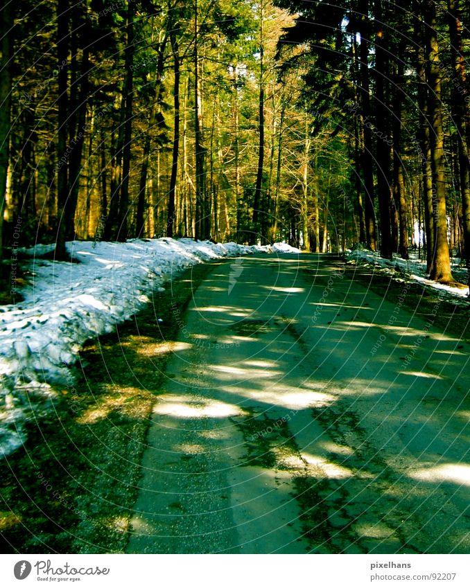 in the forest... Winter Schnee Baum Wald Straße alt kalt braun grün weiß Lichtspiel Straßenrand Farbfoto Lichtfleck Menschenleer