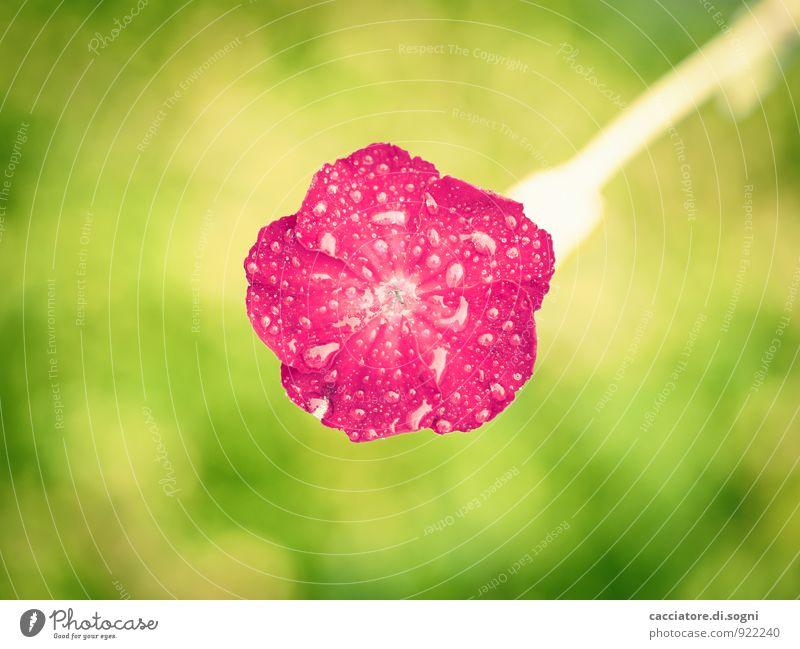 Sommergewitter Natur Pflanze schön grün Farbe rot Blume Blüte klein Glück oben orange frisch einzeln verrückt