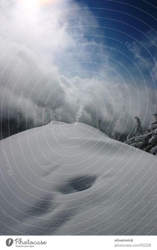 Almkogel Winterstimmung Schnee Stimmung Gipfel Bergsteigen Nadelbaum Skitour Schneekristall