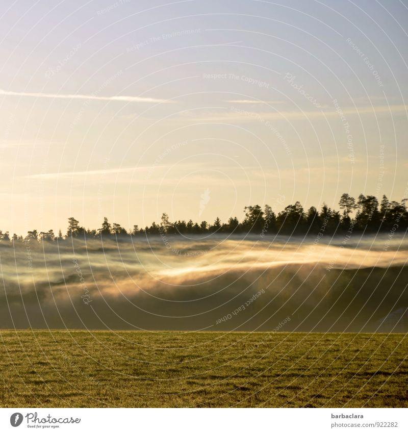 Nebelgespenst Natur Landschaft Luft Himmel Sonne Herbst Wiese Wald leuchten außergewöhnlich hell Stimmung bizarr Klima Sinnesorgane Surrealismus Umwelt Farbfoto