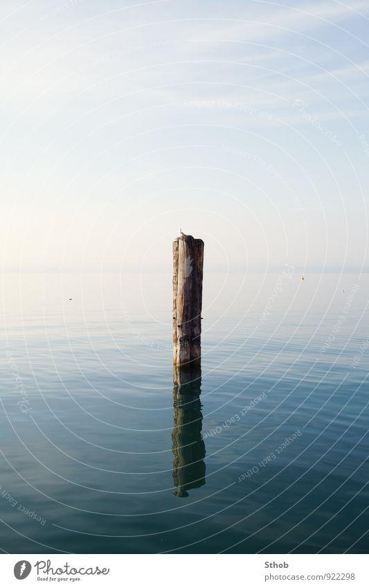 Pfahl im See mit Möwe Erholung ruhig Ferien & Urlaub & Reisen Ausflug Natur Landschaft Wasser Schönes Wetter Seeufer Gardasee Strebe Holzpfahl Tier Linie
