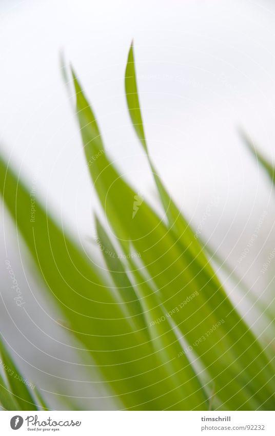 Getreidefeld Anfang April Natur grün Wiese Frühling Landschaft Feld Wachstum Rasen Landwirtschaft Halm ökologisch Kornfeld Biologische Landwirtschaft Weizen