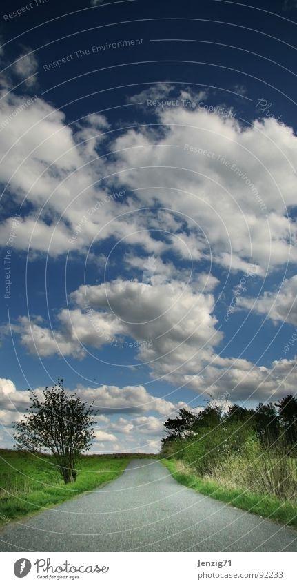 endlos. Himmel Baum Wolken Ferne Straße Wiese Gras Wege & Pfade Linie gehen laufen Ziel Unendlichkeit Ewigkeit geradeaus planlos