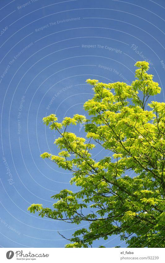 das war der sommer für dieses jahr ;-) Himmel Baum grün blau Sommer Wolken Frühling Wärme Physik
