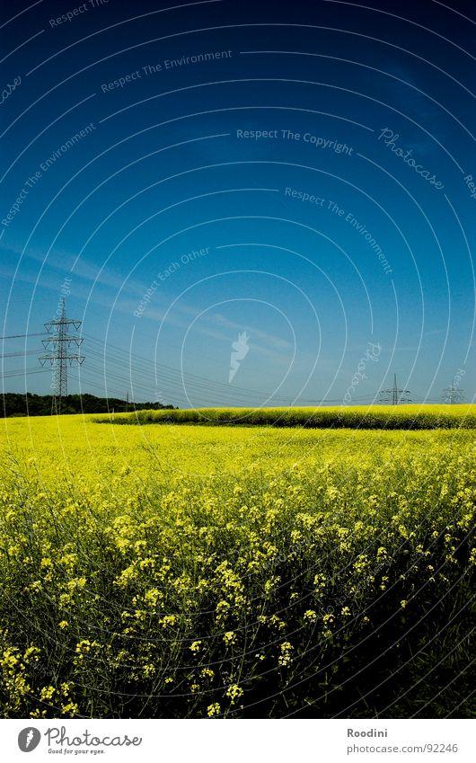 Ölfeld Raps Rapsfeld Rapsöl Küche kulinarisch Ferien & Urlaub & Reisen Sommer Landwirtschaft Feld Bauernhof Elektrizität Strommast ökologisch Ressource