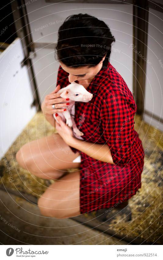 rosarotschwarz Mensch Jugendliche Junge Frau Tier 18-30 Jahre Erwachsene Tierjunges feminin außergewöhnlich niedlich Bauernhof Nutztier Schwein Tierliebe Ferkel
