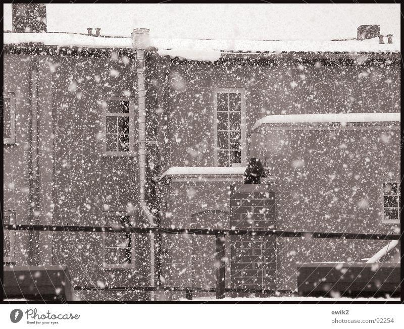 In Watte getaucht Stadt schön ruhig Haus Winter Fenster kalt Wand Architektur Schnee Gebäude Mauer Stein Fassade hell Schneefall